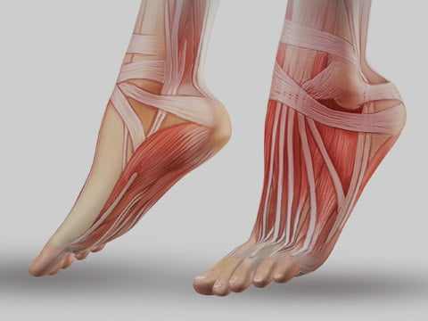 f-tendon