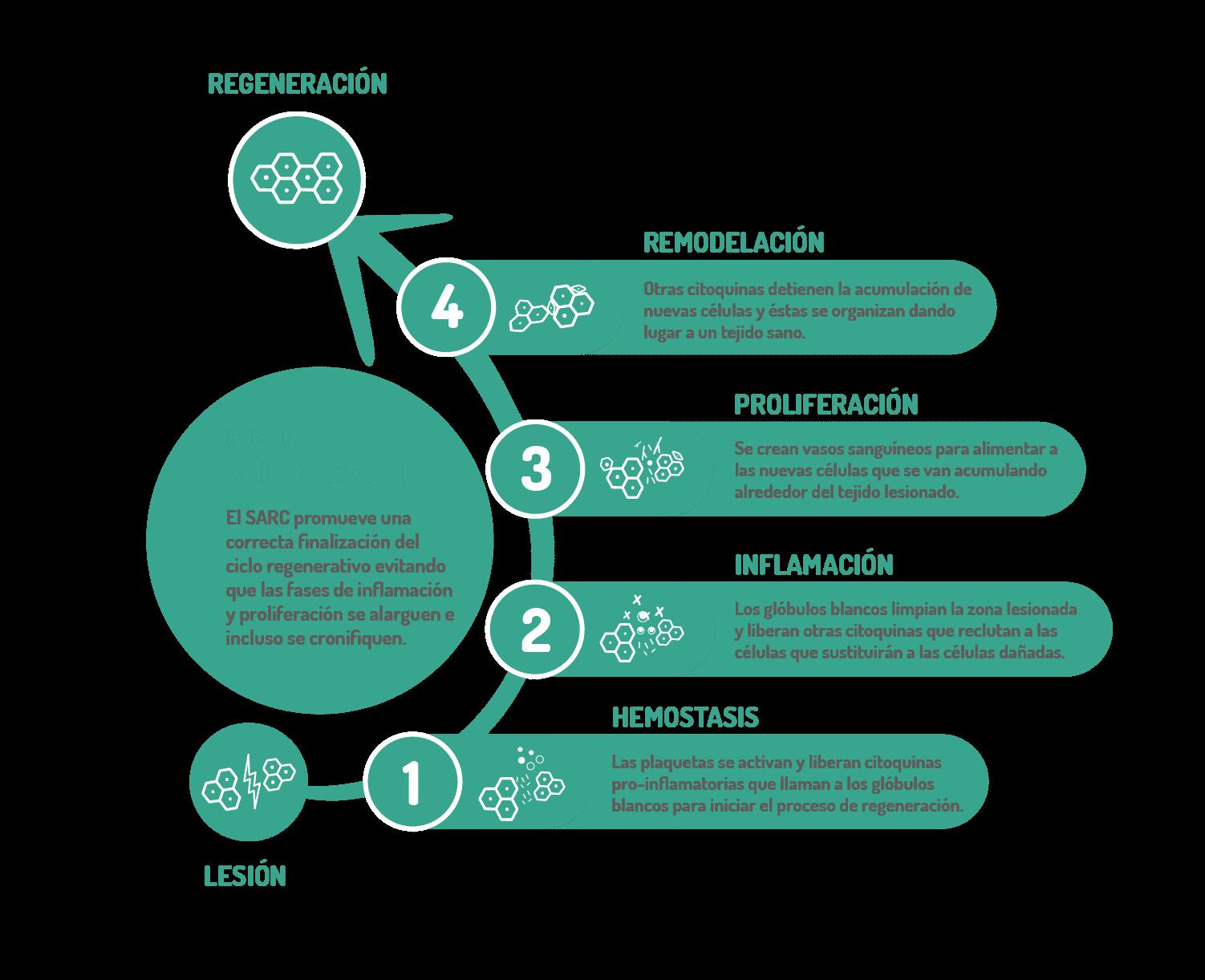 Infografía-Ciclo Regeneración-01